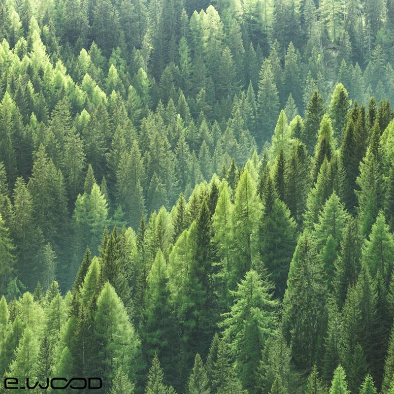 E-wood s'engage pour l'environnement